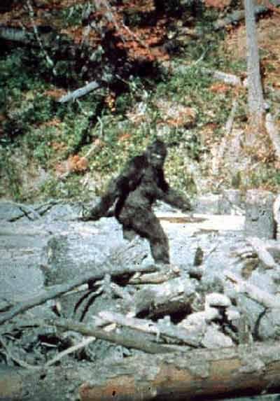 Det klassiske stillbillede fra Patterson og Gimlins berømte Bigfoot-film fra 1967