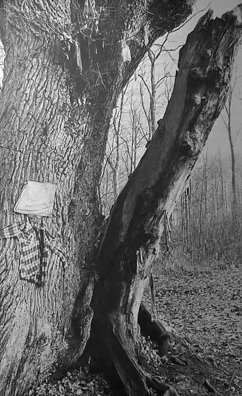 Kusse-træet igen