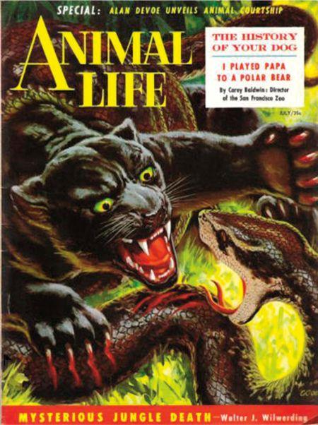 Animal Life, juli 1954